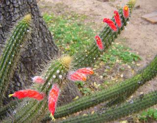 V e r d e c h a c o enero 2013 for Donde venden cactus