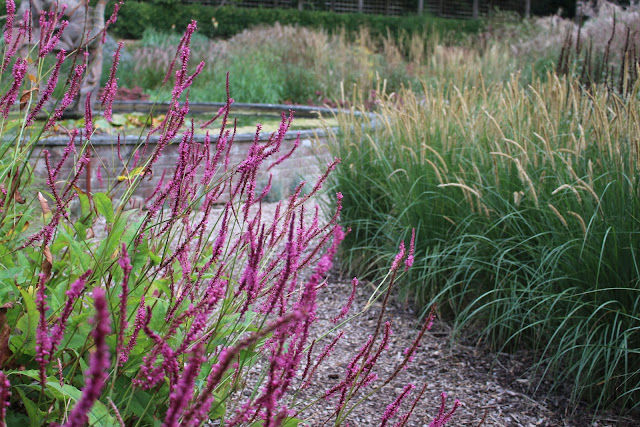 Another Persicaria I liked the look of at Knoll Gardens - 'September Spires'