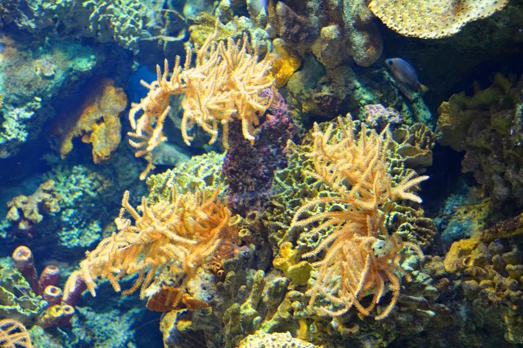 Barcelona Aquarium coral