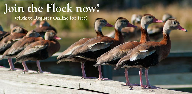 Join the Flock, Register Online Here!