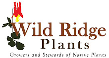 Wild Ridge Plants: Growers and Stewards of Native Plants