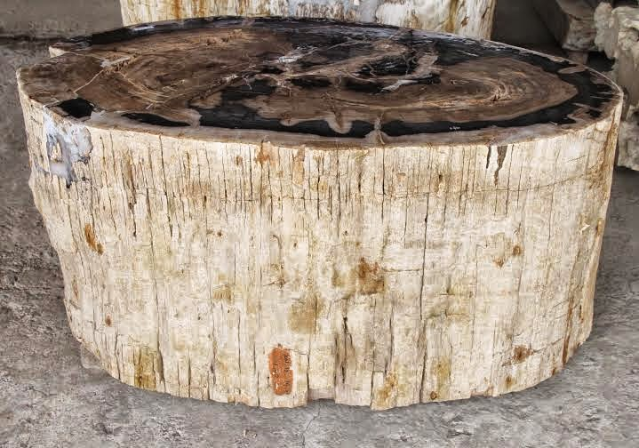 Petrified wood indonesia indogemstone for Petrified wood furniture for sale