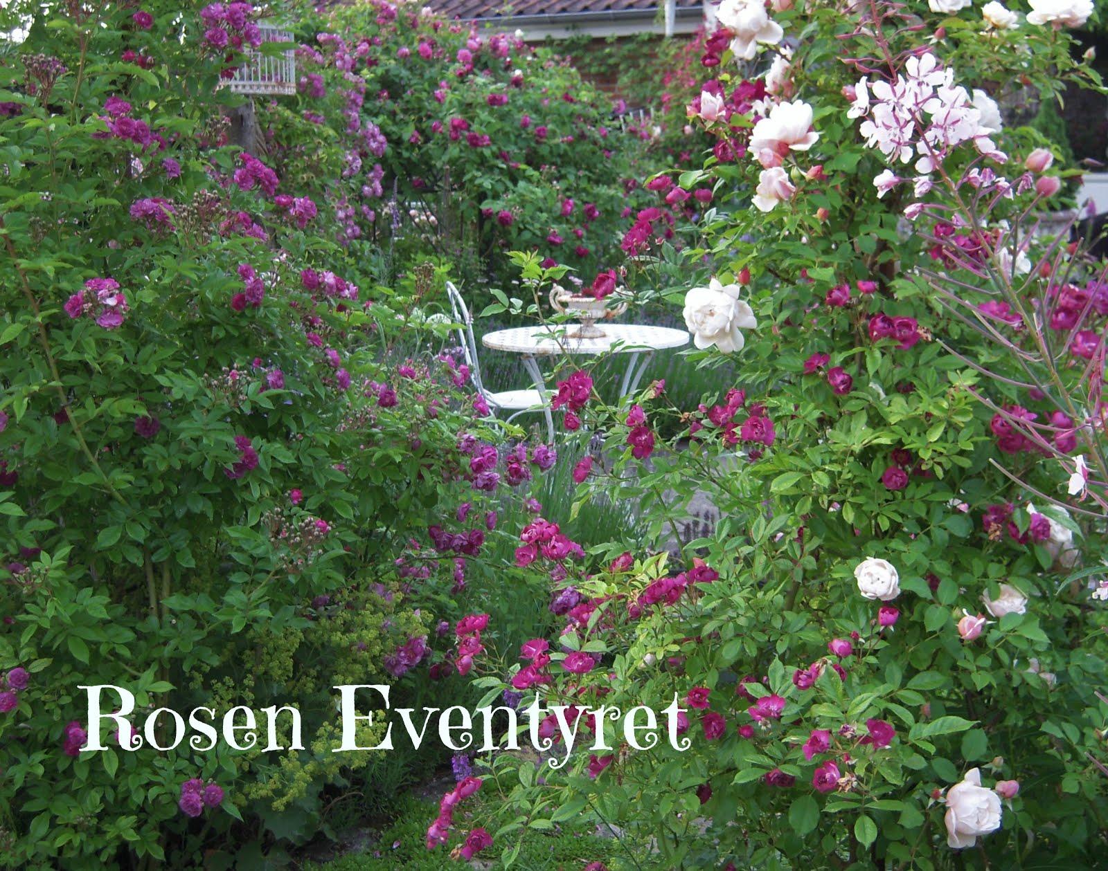 Rosen portrætter