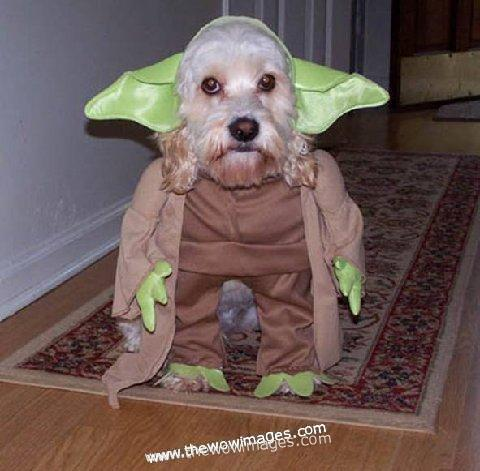 BALEARIC CRUFTS - Page 2 Funny-dogs-costumes