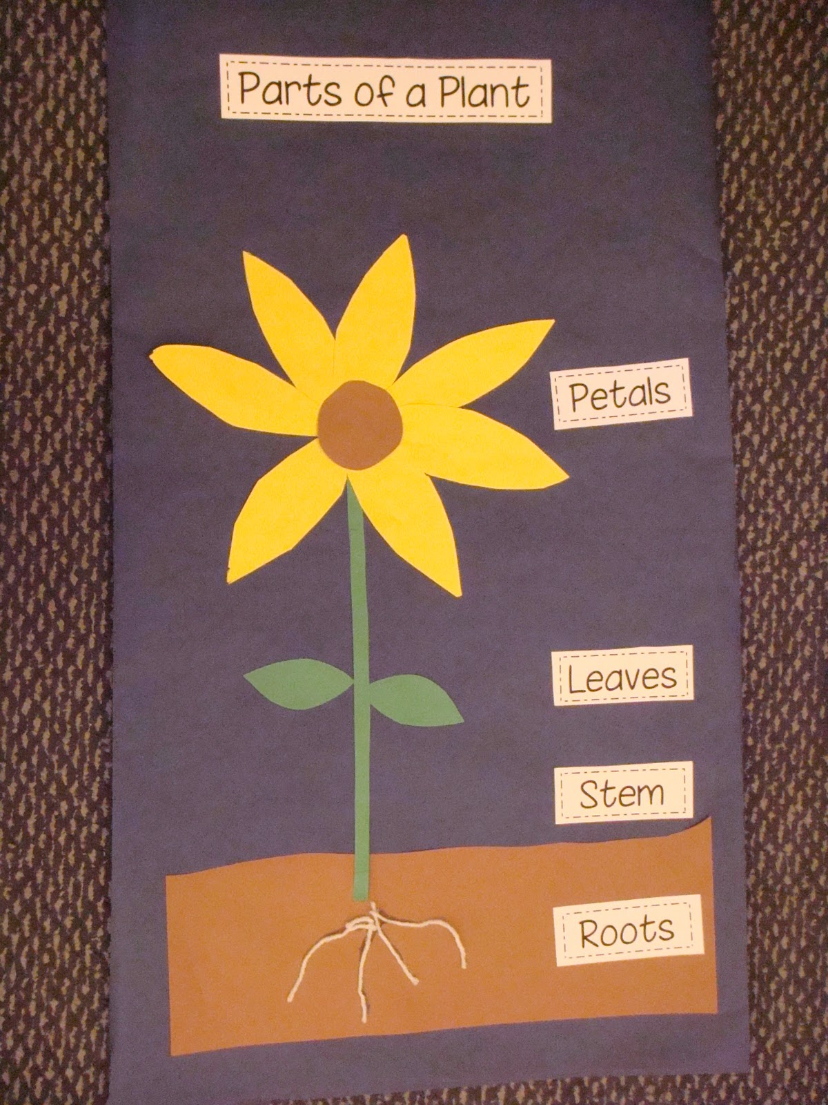 Time 4 Kindergarten  Parts Of A Plant