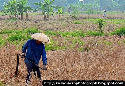farmer in Kapuas