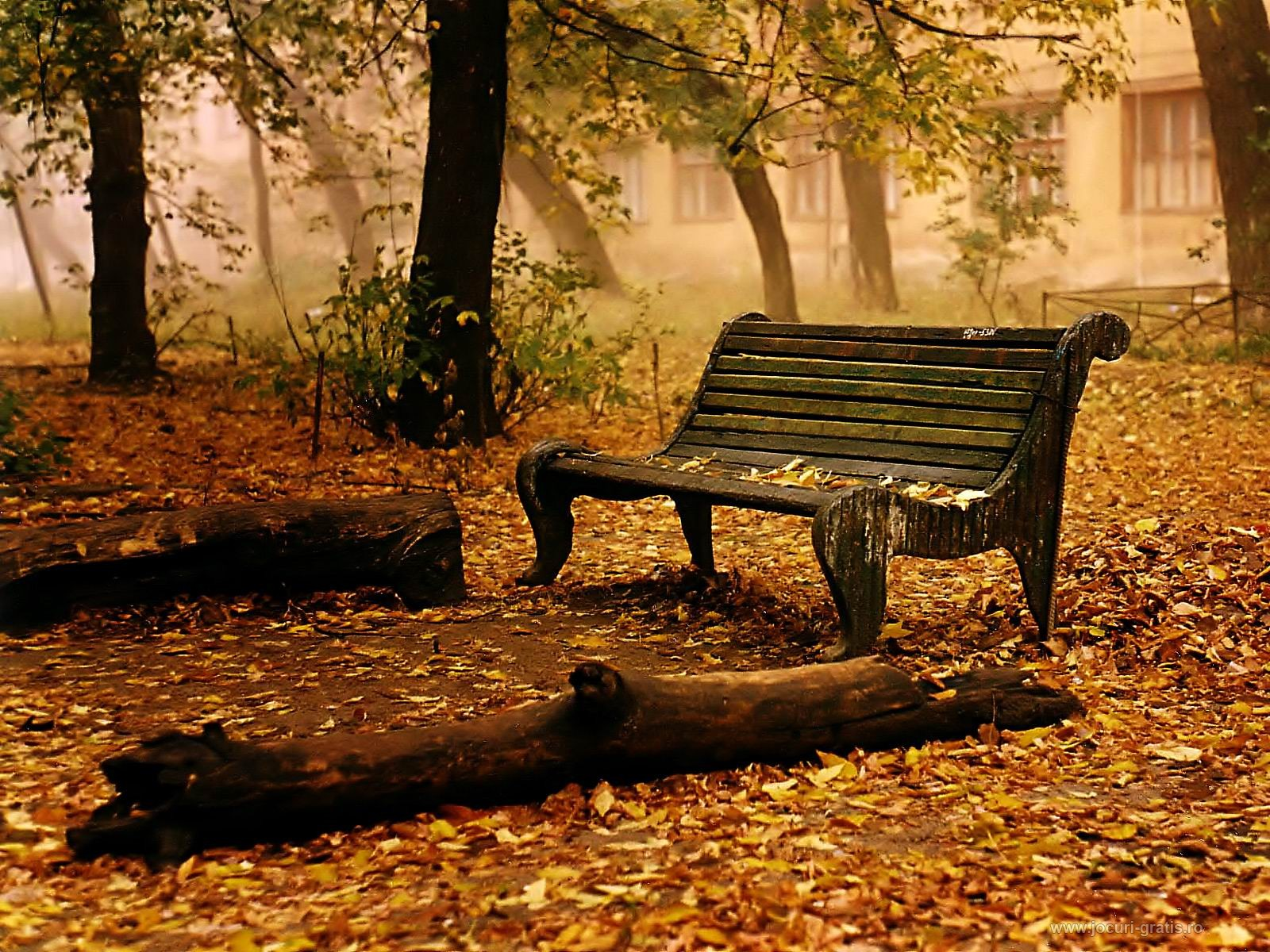 android wallpaper autumn