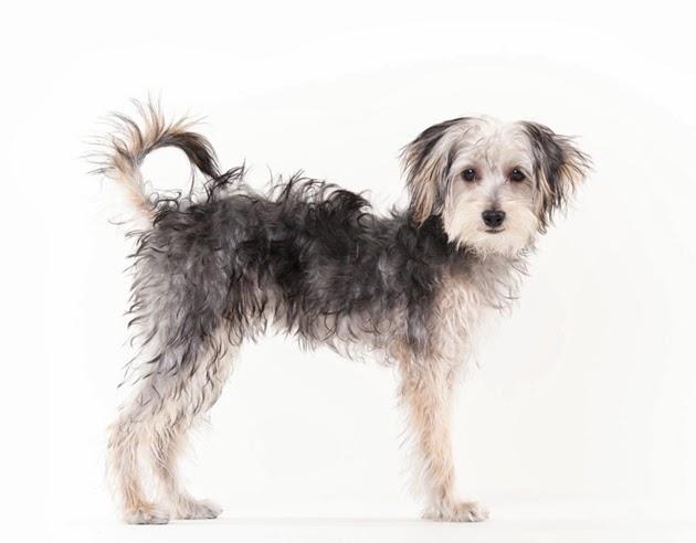 bring fido dog friendly hotel search