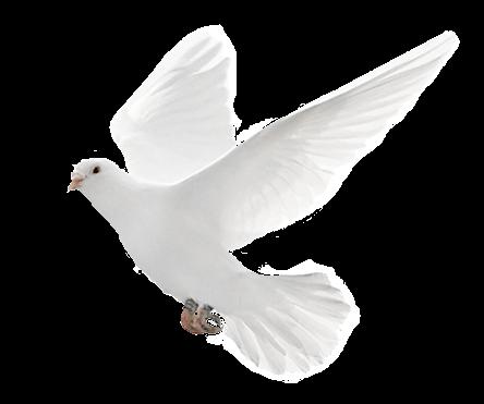 Friedenstaube malvorlage foto