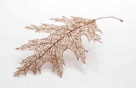 لوحات فنية لأوراق الشجر وبعض الأعمال الفنية من شعر  Human-hair-leaves3-550x356