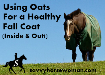 Using Oats For a Healthy Fall Coat (Inside & Out!)