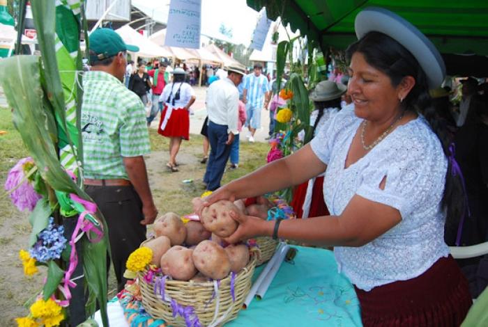 Comunidad San Andrés: El 21 y 22 de enero, se realizará la 34 versión de la feria departamental de la Papa