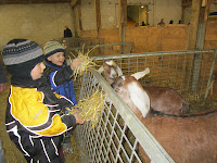 petting zoo, fall fair, feeding animals