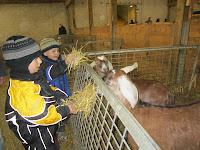 petting zoo, fall fair, feeding animals