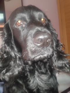 Rocco, perro fallecido
