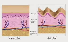 struktur kulit muda dan tua