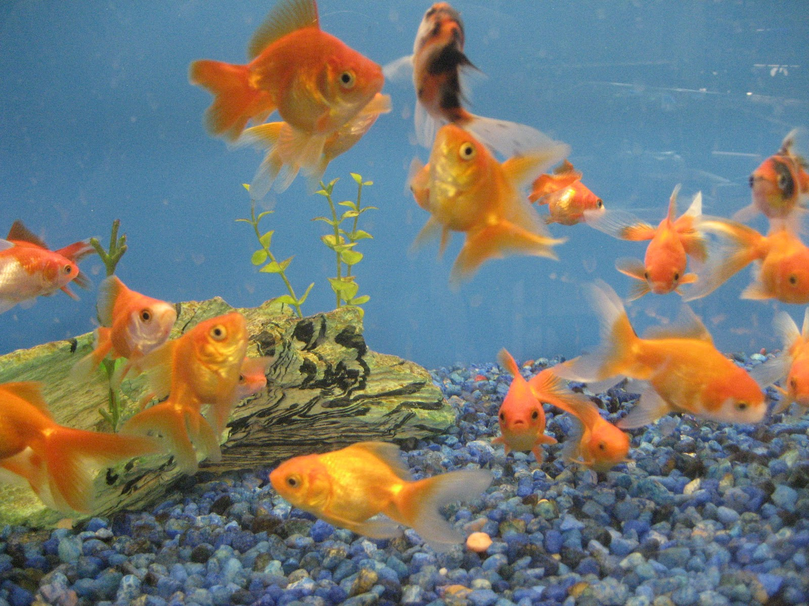 Image gallery ectotherm examples for Examples of fish