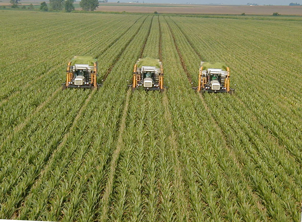 monocultural farming in the u s Due to its very nature, monoculture farming, means cultivating one crop, usually in an intensive manner and on a very large scale for instance, corn, wheat, soybeans, cotton and rice are commonly grown this way in the united states [2] .