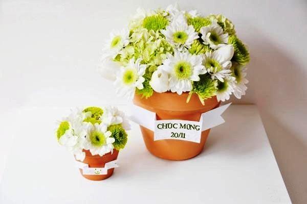 Hoa đẹp ngày 20/11 dành tặng thầy cô giáo