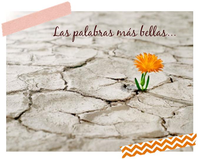 Las 10 palabras mas bellas del español