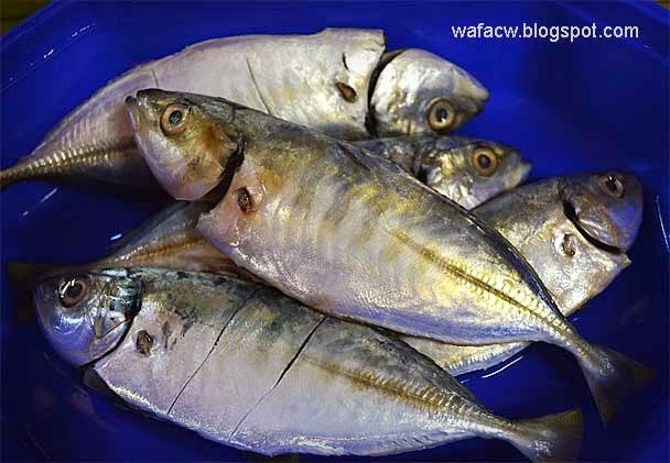 ikan pelata untuk goreng ikan pelata sambal