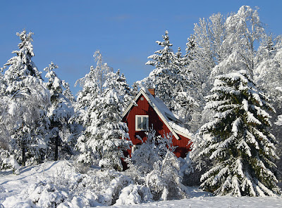 Nature-of-Sweden-Europe-winter-holiday