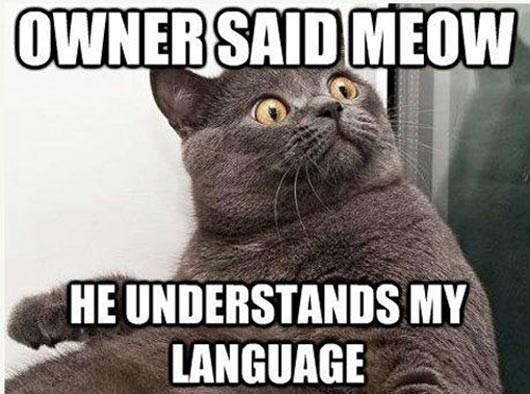 OMG! Owner Said Meow