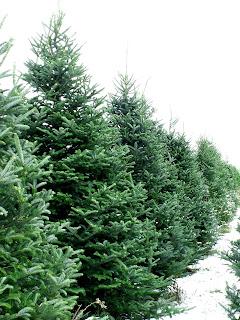Де купити живу ялинку, штучну ялинку. Вибрати / Где купить живую елку, искусственную елку  / Where to buy a Christmas tree
