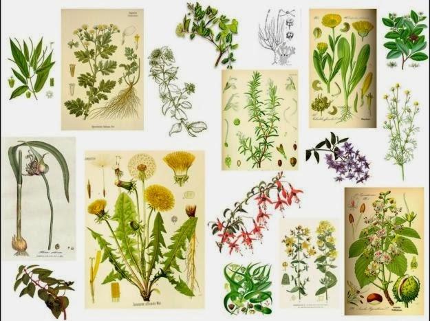 Orgonitas canarias 10 plantas medicinales y para qu sirven for 10 plantas ornamentales y para que sirven