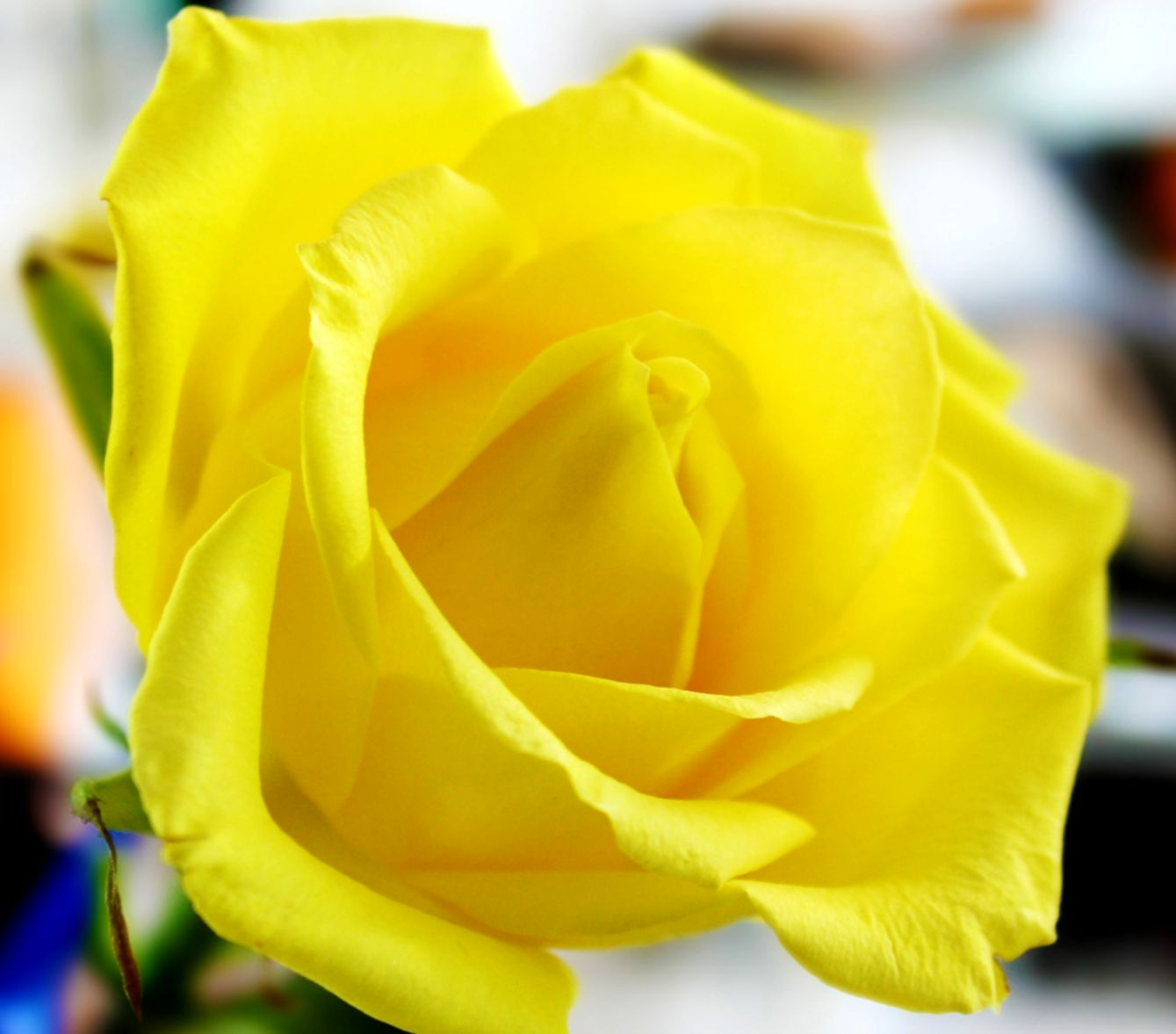 Beautiful Yellow Flower Wallpapers Free Download Best Image Background
