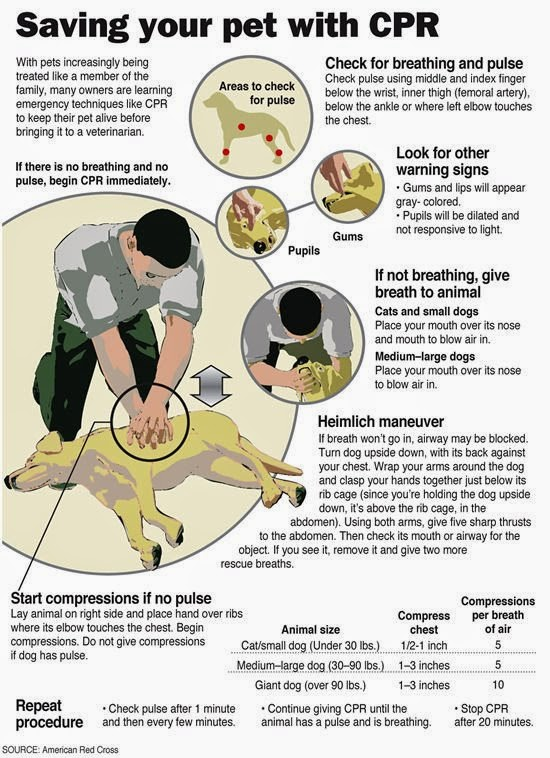 how to give a dog cpr