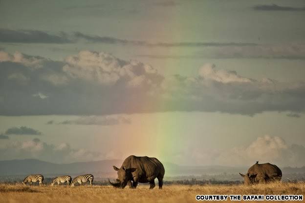 Rhinos at Solio Reserve, Kenya