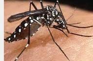 Nyamuk penyebab penyakit demam berdarah