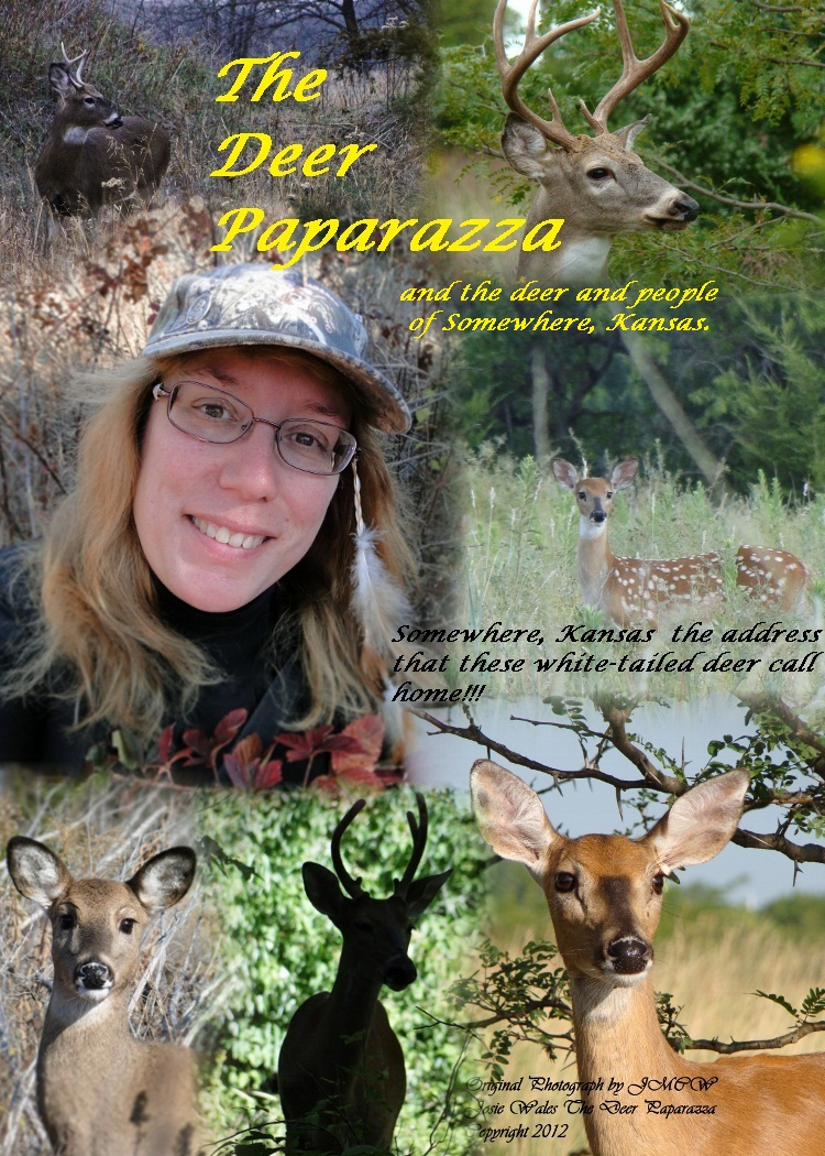 The Deer Paparazza