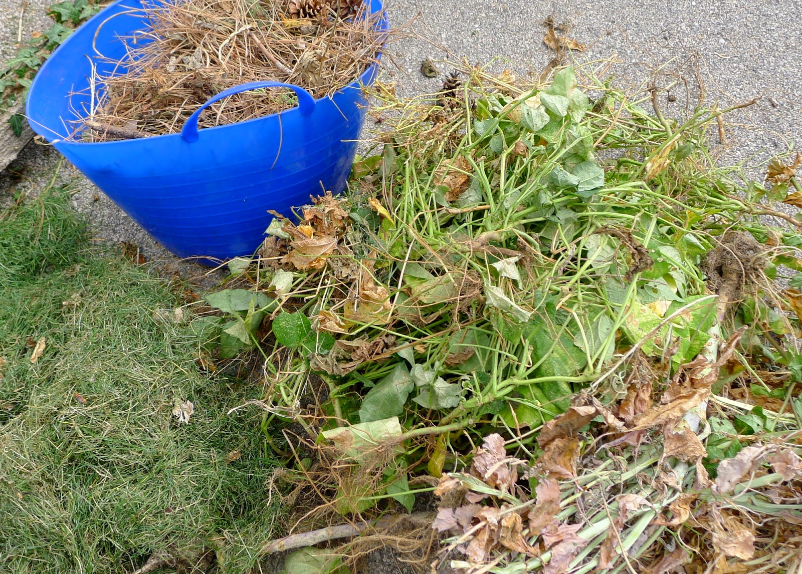 Fall Clean Up: what to compost, what to lawn bag and what to trash, urban farming, gardening