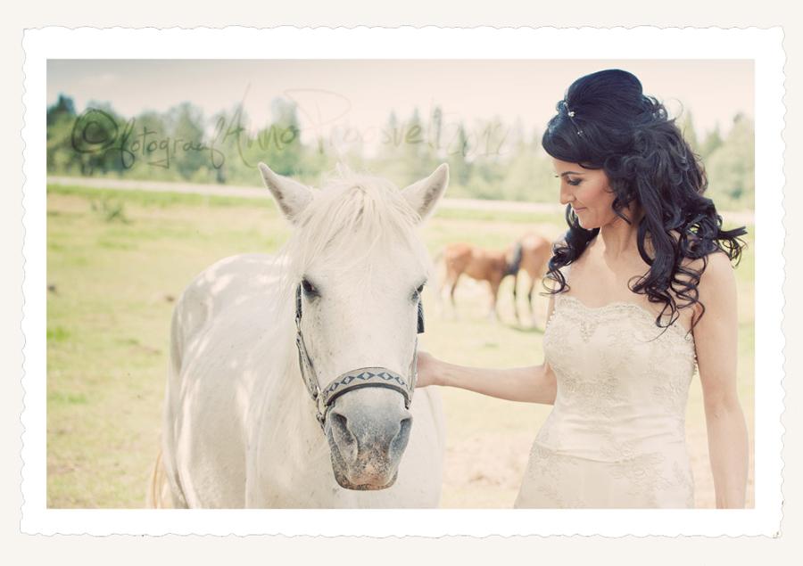 pruut-valge-hobusega-pulmafoto