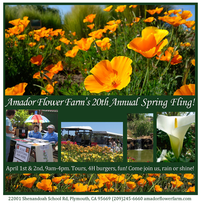 Amador Flower Farm: Spring Fling - April 1 & 2