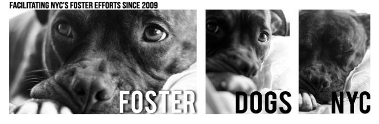 Foster Dogs NYC