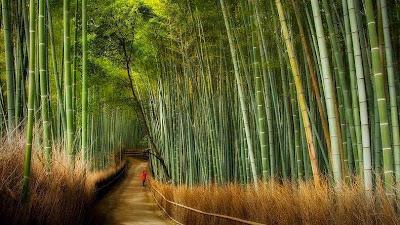 hutan bambu sagano-2