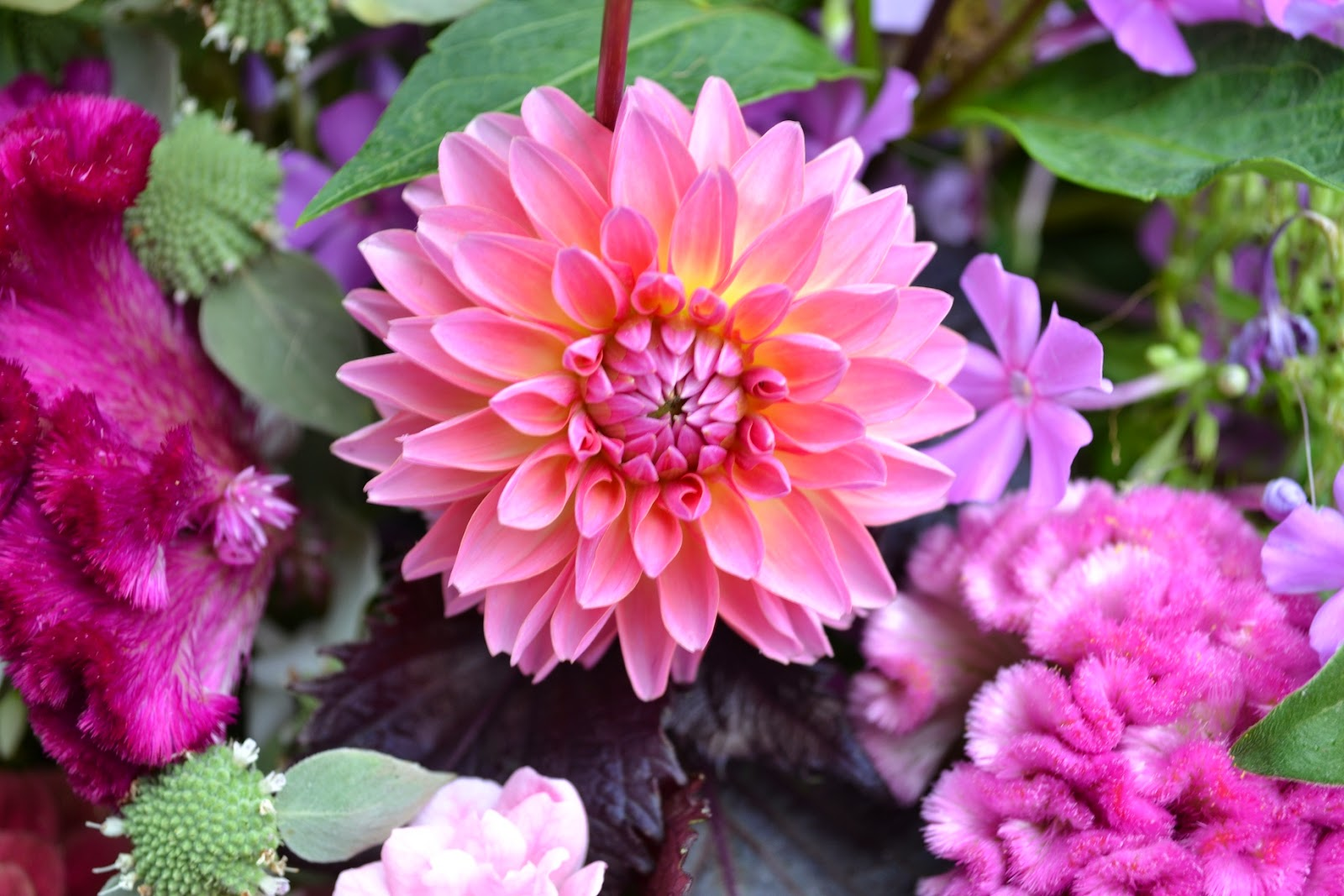 Wedding Flowers from Springwell: Coming Soon- Dahlias for Summer and ...