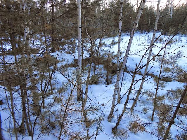 Развалины геологоразведки в Челябинском городском бору