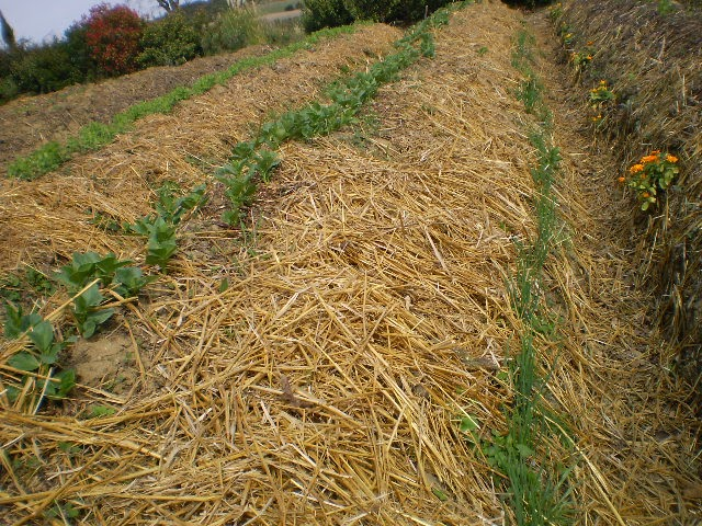 Tr sors de campagne for Creer une butte permaculture
