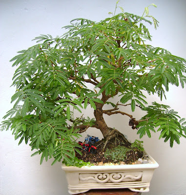 Jardins de agharta sugest o de tipos de solo para plantar for Como cultivar bonsais