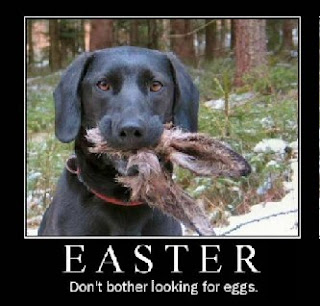 easter funny dog and eggs