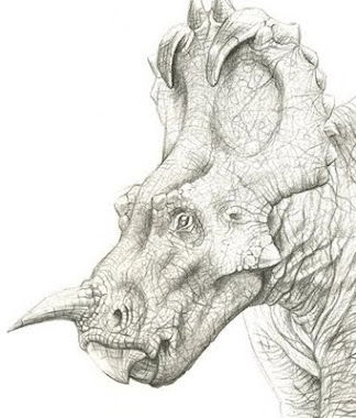 Centrosaurus apertus
