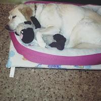 Durmiendo con su peluche en su cama