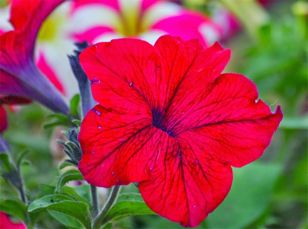 Ένα λουλούδι από το blog ΕΚΦΡΑΣΟΥ