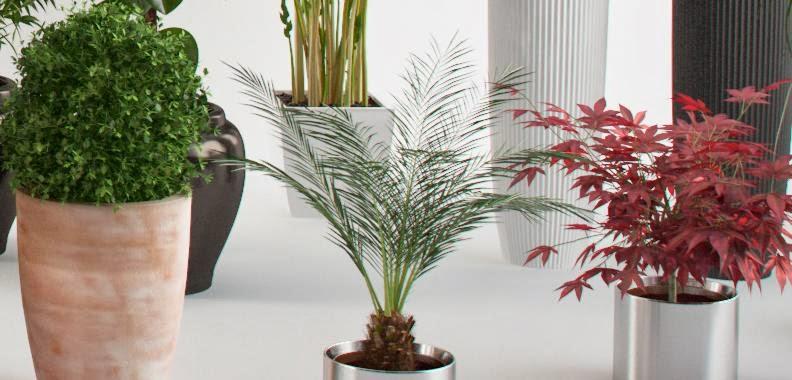 el cuidado de las plantas de interior en el verano mosquitos