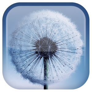 Download the free Galaxy S3/S4 Dandelion live wallpaper featuring