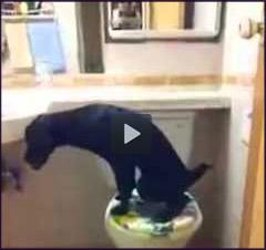 O Cão mais higiênico que você verá hoje...